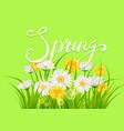 spring daisies chamomiles dandelions juicy green vector image