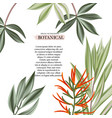 exotic flowers and leaves decoration modern vector image vector image