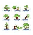 flat bonsai styles set green bonsai trees vector image