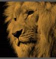 a realistic portrait of a lion vector image