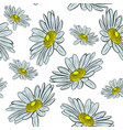 blossoming chamomile buds seamless pattern vector image vector image