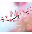 cherry blossom realistic blur background vector image vector image