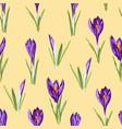 violet crocuses flowers seamless pattern vector image vector image