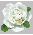 White wild rose for design vector image vector image