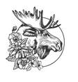 moose head animal engraving vector image