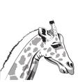 giraffe drawing icon vector image