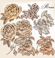 collection hand drawn detailed roses for design vector image vector image