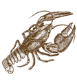 engraving crayfish vector image
