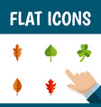 flat icon maple set of linden hickory frond and vector image vector image