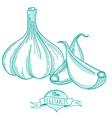 Outline hand drawn sketch of garlic flat style vector image