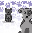 pets dog and cat vector image