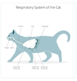 Respiratory system of the cat vector image vector image