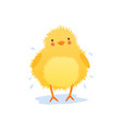 cute baby chicken shaking water after bathing vector image