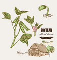 Hand drawn soy plant soy twig and soybean