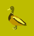 in flat style of wild duck vector image