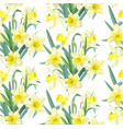 seamless pattern lush yellow daffodils on white vector image vector image