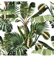 tropical exotic plants palm trees vector image