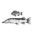 Fish predators set vector image