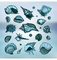 Collection of seashells vector image