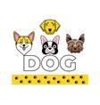 dog faces icon bulldog corgi labrador yorkie vector image