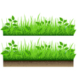 Grass Border Isolated On White Background vector image vector image
