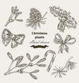 hand drawn christmas plants mistletoe and holly vector image vector image