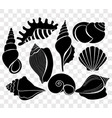 set of beautiful sea shells vector image vector image