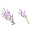 set of two purple lavender flowers bouquets vector image