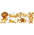 Set of wild lions vector image vector image