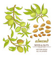 almond set vector image vector image