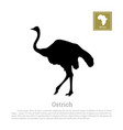 black ostrich silhouette on white background vector image