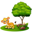 cartoon lion under a tree on a white background vector image vector image
