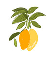 mango sketch for your design vector image vector image