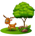 cartoon deer under a tree on a white background vector image vector image