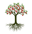 green summer tree with root and red apple fruits vector image vector image