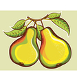 Pears vector image vector image