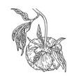 peony flower on stem vector image