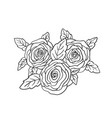 beautiful rose flowers and leaves black hand vector image