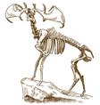 engraving megaloceros deer skeleton vector image vector image