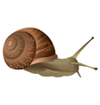 Garden snail isolated vector image vector image