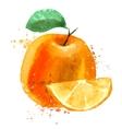 Orange logo design template fruit or food vector image