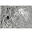 Zebra and cheetah and pattern background vector image vector image