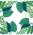 foliage leaves herbs botanical background vector image