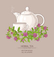Clover tea vector image