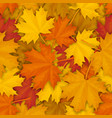 fallen maple leaves pattern vector image vector image
