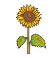 Sunflower cartoon floral drawing vector image