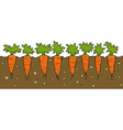 a bed of carrot vector image vector image