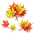 autumn leaves bright colourful autumn maple vector image