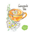 camomile tea watercolor vector image vector image