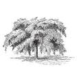 camperdown elm vintage vector image vector image